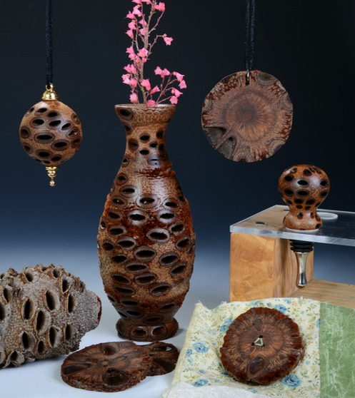 Banksia Pods